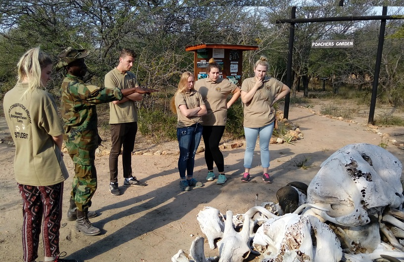 volunteer work africa animals