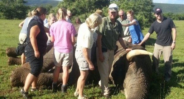 shamwari elephant research