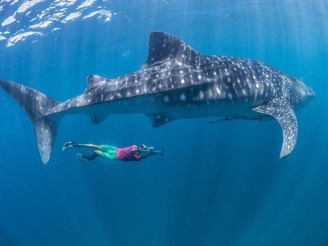 marine conservation mozambique