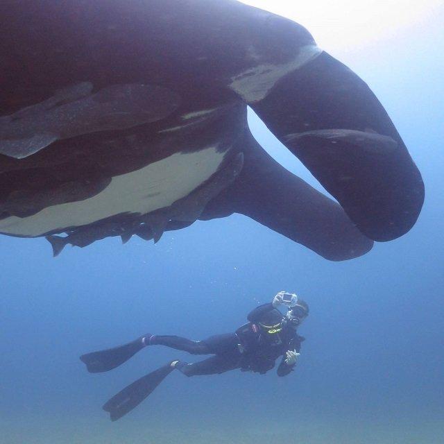 marine volunteering